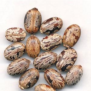 BI MA ZI - Castor Bean
