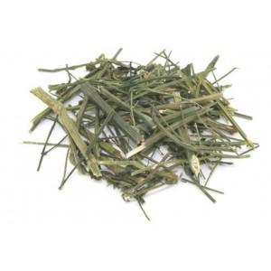 CHUAN XIN LIAN - Green Chiretta