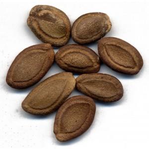 GUA LOU REN - Snakegourd Seed