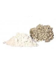 Turkey Tail Mushroom Pure Powder -Trametes versicolor - polysacc
