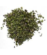 Fu Ping-Herba Spirodelae