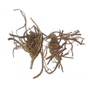 BAI QIAN - Cynanchum Root