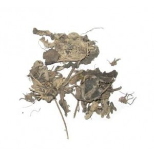 BAI WEI - Swallow Wort Root