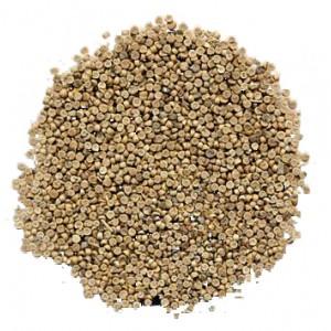 DONG KUI ZI - Abutilon Seed
