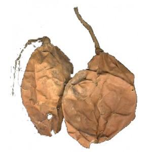 GUA LOU SHI - Trichosanthes Fruit