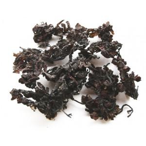 HAI ZAO - Sargasso - Seaweed