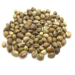 HUO MA REN - Canabbis Seed - Hemp Seed