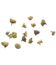 BAI JI LI - Puncture Vine Fruit - Tribulus Fruit