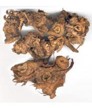 GAO BEN - Ligusticum Root - Straw Root